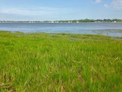 Lyme Coastal Wet Lands