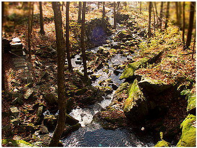 Kent Land Trust Creek